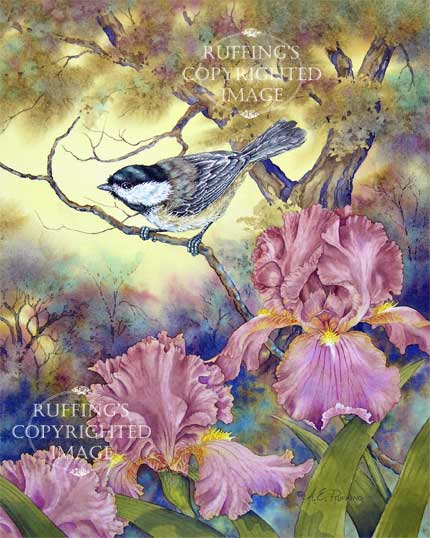 """Black-capped Chickadee and Pink Iris"" Original Watercolor Painting by A E Ruffing"